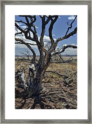 Wildfire Scarred Mesquite Tree Skeleton Framed Print by Allen Sheffield