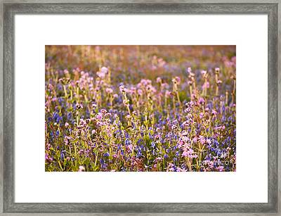 Wildflower Dusk Framed Print by Anne Gilbert