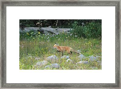 Wildflower Fox Framed Print by Angelique Rea