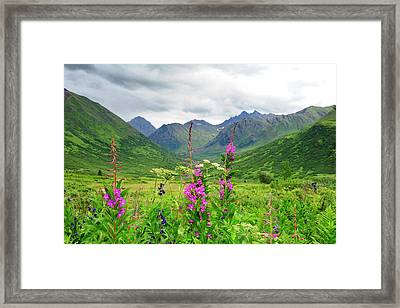 Wildflower Front And Center In This Framed Print by Sheila Haddad