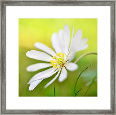 Wildflower Framed Print by Gynt