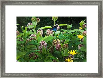 Wildflower Meadow Framed Print by Kenneth Murray