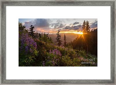 Wildflower Meadows Sunstar Framed Print by Mike Reid