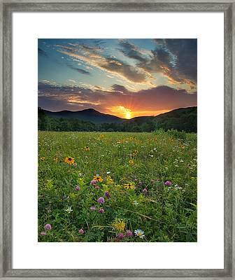 Wildflower Sunset Framed Print by Darylann Leonard Photography