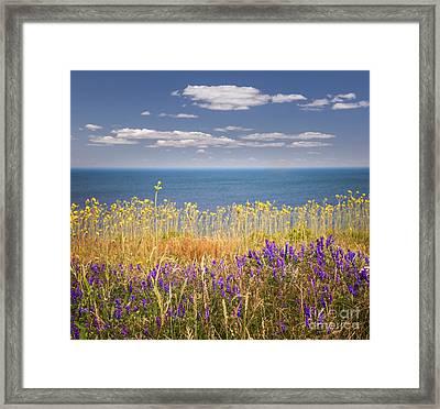 Wildflowers And Ocean Framed Print by Elena Elisseeva