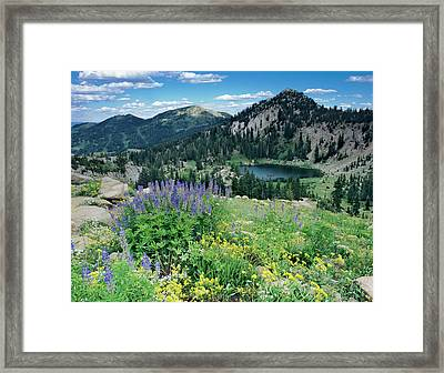 Wildflowers And View Of Lake Catherine Framed Print by Howie Garber