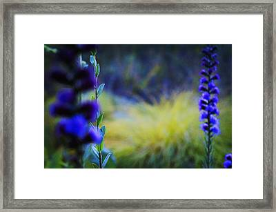 Wildflowers Framed Print by Celestial Images