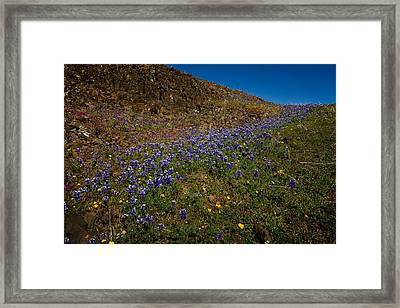 Wildflowers On Table Mountain 2 Framed Print by Robert Woodward