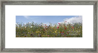 Wildflowers Panoramic Framed Print by Tim Gainey