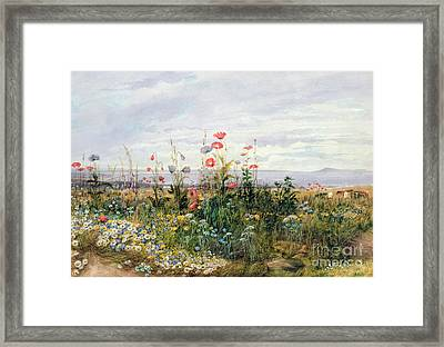 Wildflowers With A View Of Dublin Dunleary Framed Print by A Nicholl