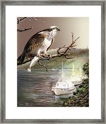 Wildlife Ospey Fishing Competition Framed Print by Regina Femrite