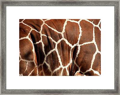 Wildlife Patterns  Framed Print by Aidan Moran