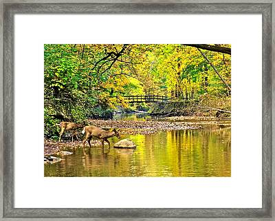 Wildlifes Thirst Framed Print by Frozen in Time Fine Art Photography