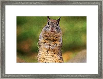 Will Work For Peanuts Framed Print by Donna Kennedy