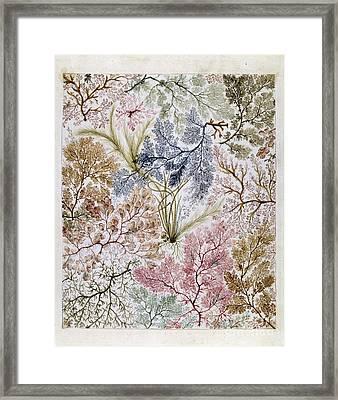 William Kilburs Seaweed Fabric Design Framed Print by Celestial Images