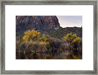 Willow Reflections Framed Print by Dave Dilli