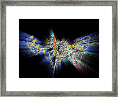 Wilms Tumor Suppressor Bound To Dna Framed Print by Laguna Design