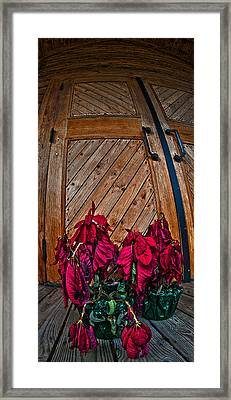 Wilted Framed Print by Murray Bloom