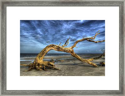 Wind Bent Driftwood Framed Print by Greg and Chrystal Mimbs
