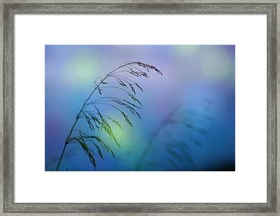 Wind Colors Framed Print by Guido Montanes Castillo