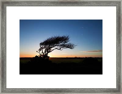 Wind Sculptured Hawthorn Tree, The Framed Print by Panoramic Images