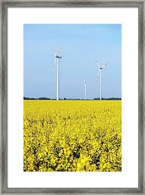 Wind Turbines In Rapeseed Field Framed Print by Bildagentur-online/mcphoto-schulz