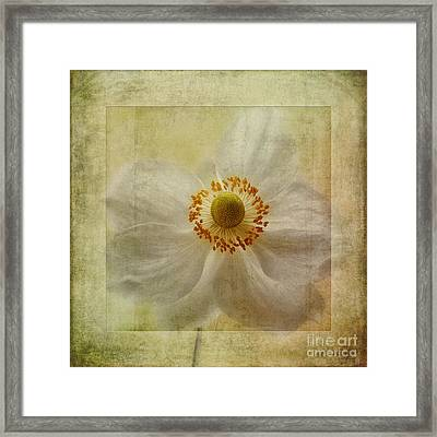 Windflower Textures Framed Print by John Edwards