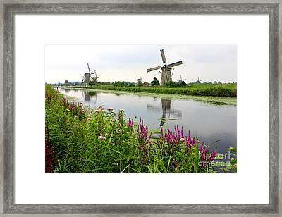 Windmills Of Kinderdijk With Wildflowers Framed Print by Carol Groenen