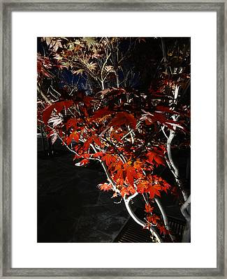 Window Of Sky And Flamed Leaves In My Eye Framed Print by Kenneth James
