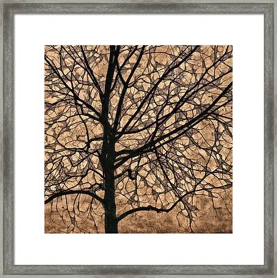 Windowpane Tree In Autumn Framed Print by Carol Leigh