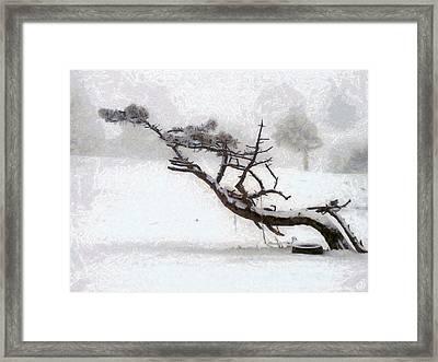 Windswept Framed Print by Gun Legler