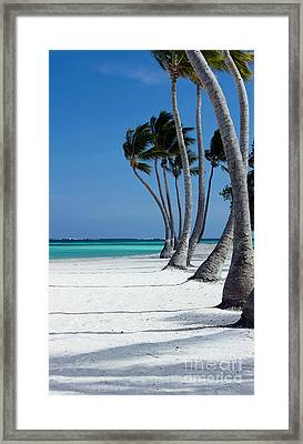 Windy Paradise Framed Print by Sophie Vigneault