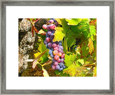 Wine Grapes II Framed Print by Shari Warren