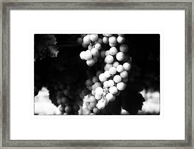 Wine Grapes In Mono Framed Print by Georgia Fowler