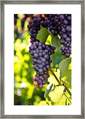 Wine Grapes Framed Print by Scott Pellegrin