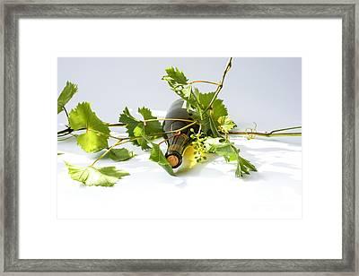 Wine Framed Print by Patricia Hofmeester