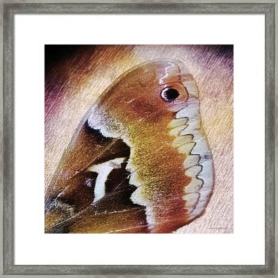 Wing Of A Moth Framed Print by Melissa Bittinger