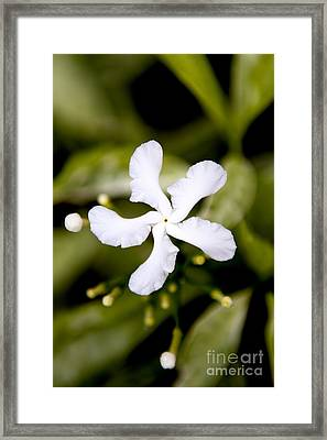 Winged Petals Framed Print by Thanh Tran