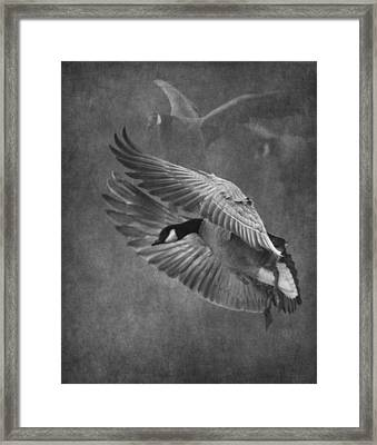Winged Symphony Framed Print by Angie Vogel