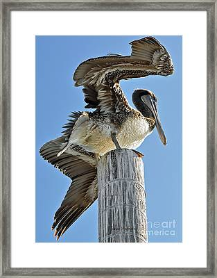 Wings Of A Pelican Framed Print by Susan Wiedmann