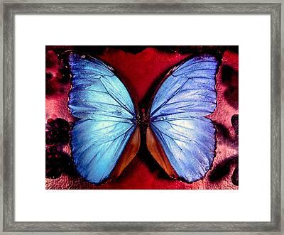 Wings Of Nature Framed Print by Karen Wiles