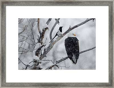 Winter Allies Framed Print by Sandy Sisti