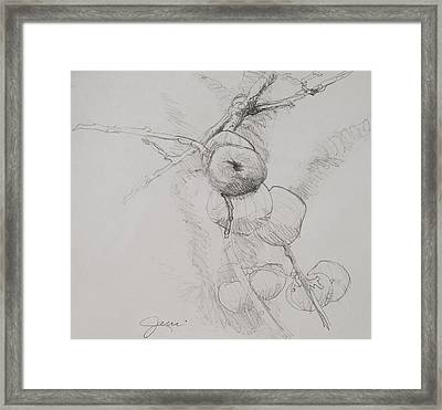 Winter Apples Sketch Framed Print by Jani Freimann