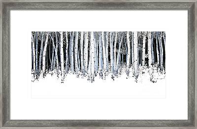 Winter Aspens  Framed Print by Michael Swanson