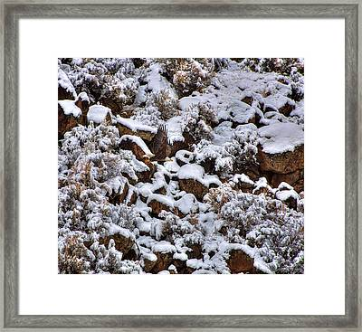 Winter Bald Eagle Framed Print by Britt Runyon