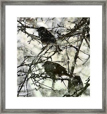 Winter Birds Framed Print by John Goyer