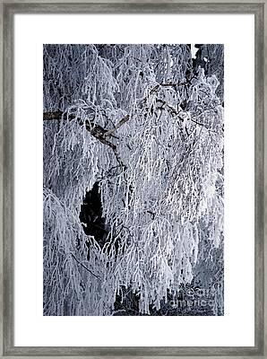 Winter Blanket Framed Print by Sharon Elliott