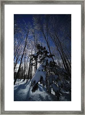 Winter Blue Framed Print by Karol Livote