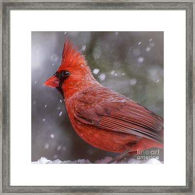 Winter Cardinal Framed Print by Kerri Farley