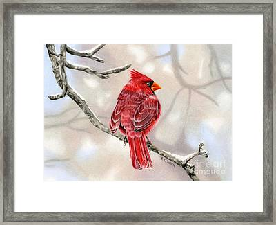 Winter Cardinal Framed Print by Sarah Batalka